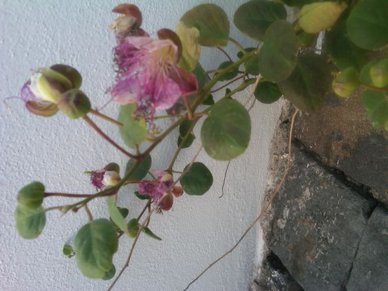 Can you guess what flower this is?