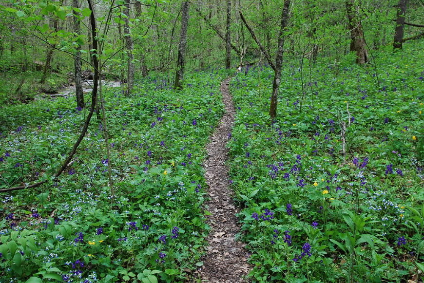 trail_in_taylor_hollow